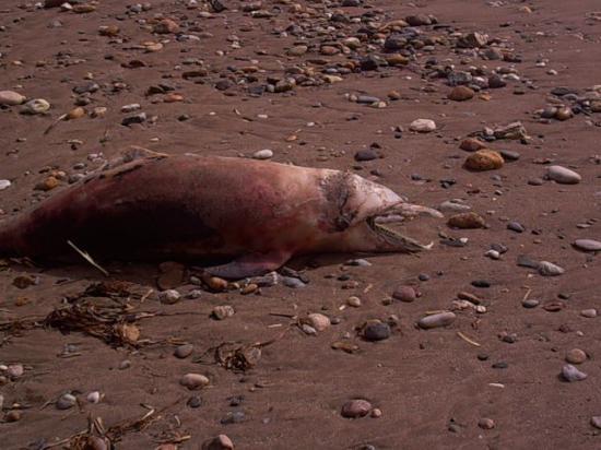 3000 delfines muertos en Perú