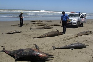 delfines muertos en peru