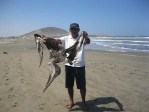 pelicanos muertos en peru