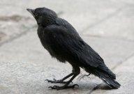 Aves muertas caen del cielo en New Jersey