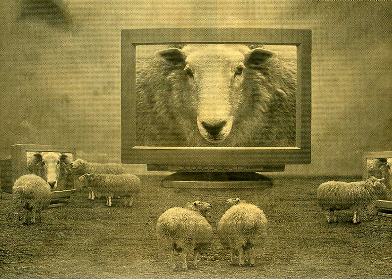 sheep-mentality-herd-yv-mind-control