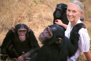 Jane-Goodall-con-los-chimpances