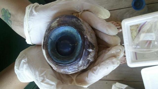ojo-gigante
