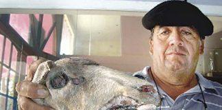 Hallan ganado mutilado en Santiago del Estero, Argentina