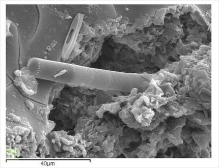 Hallan algas fosilizadas en un meteorito