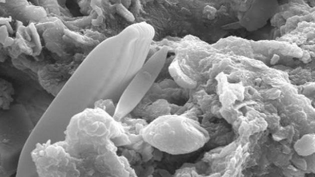 Hallan algas fosilizadas en un meteorito: ¿Es la vida fruto de una siembra extraterrestre?