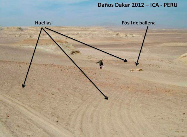 Reiteran denuncia por posibles daños arqueológicos en Perú por el Dakar