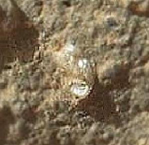 Flor en Marte