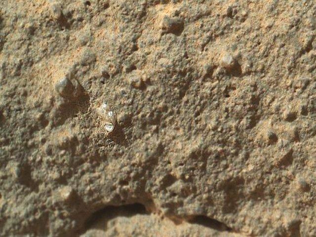 Curiosity capta una supuesta flor en Marte
