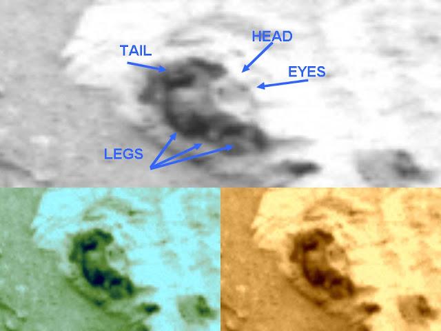 Otra supuesta rata en Marte captada por el Curiosity