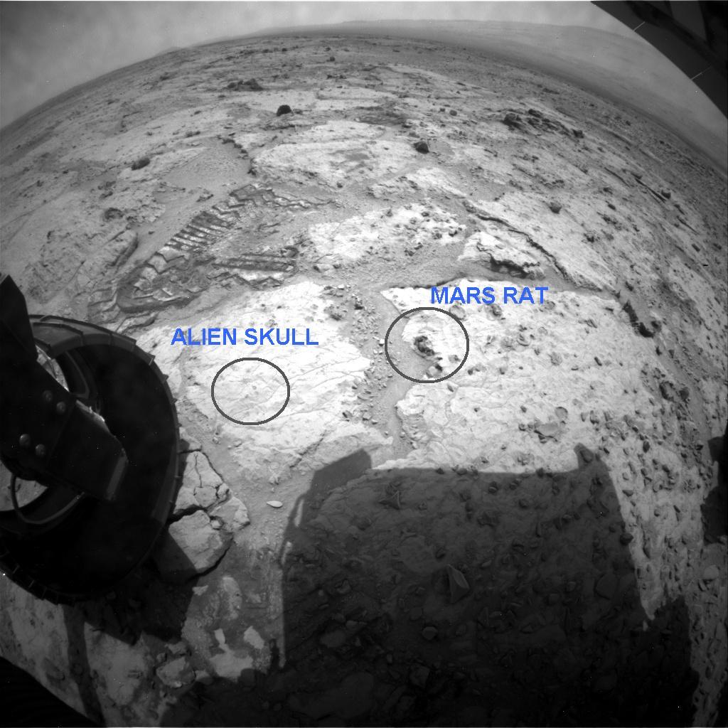 """Anomalías en Marte: Una """"rata"""" y un """"cráneo"""" en la superficie del planeta"""