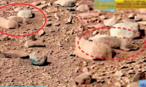 Supuesta Rata en Marte, captada por el Curiosity