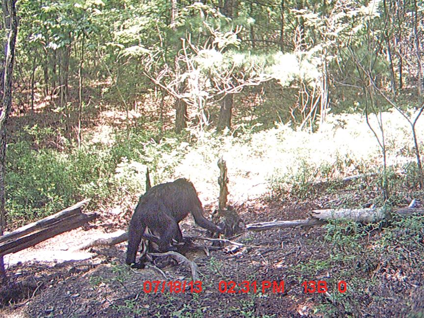 "Posible ""Bigfoot"" fotografiado en Southwest Virginia"