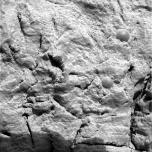 El crinoide fosilizado
