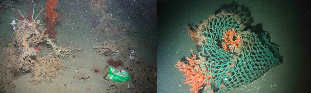 Incluso las partes más profundas del océano están llenos de la basura