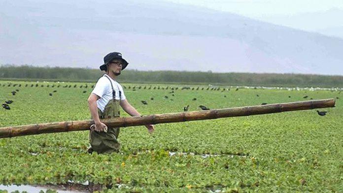 Ejemplo a seguir: Científico peruano descontamina una laguna de Perú