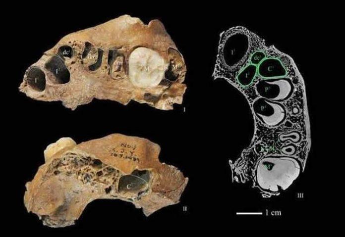 Restos encontrados en el yacimiento de Xujiayao, en el norte de China