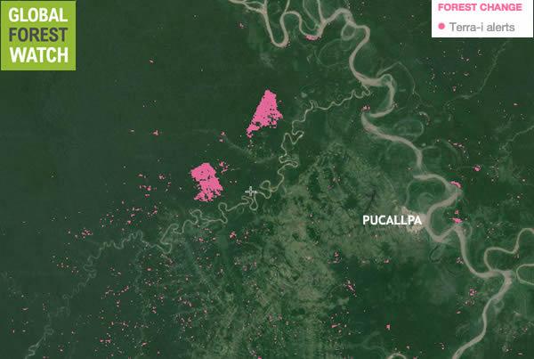 Zona de deforestación en Pucallpa (Selva de Perú).