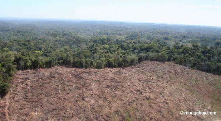 Lamentable imagen que muestra la depredación del medio ambiente en Perú.