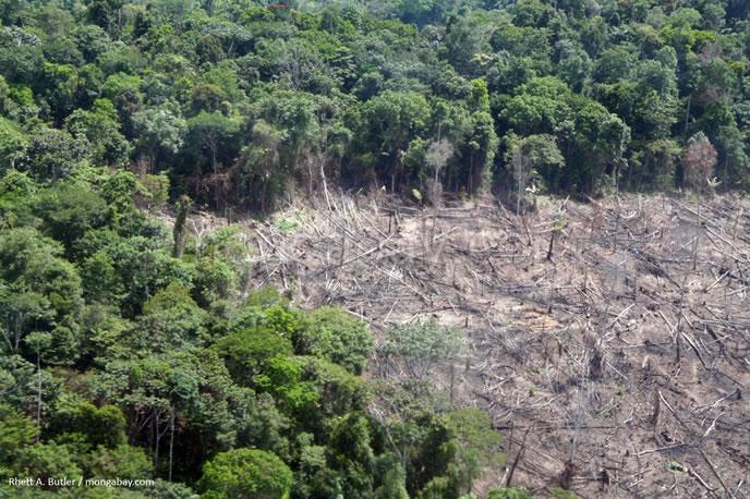Deforestación en Perú. Hable con sus hijos sobre lo que está sucediendo en la Amazonía, solo así realizaremos un cambio positivo.