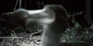 Escena tomada del presunto vídeo de un Dodo (¿En Costa Rica?)