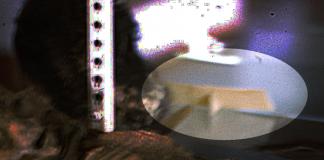 El sitio web The Black Vault realizó un análisis de la imagen.