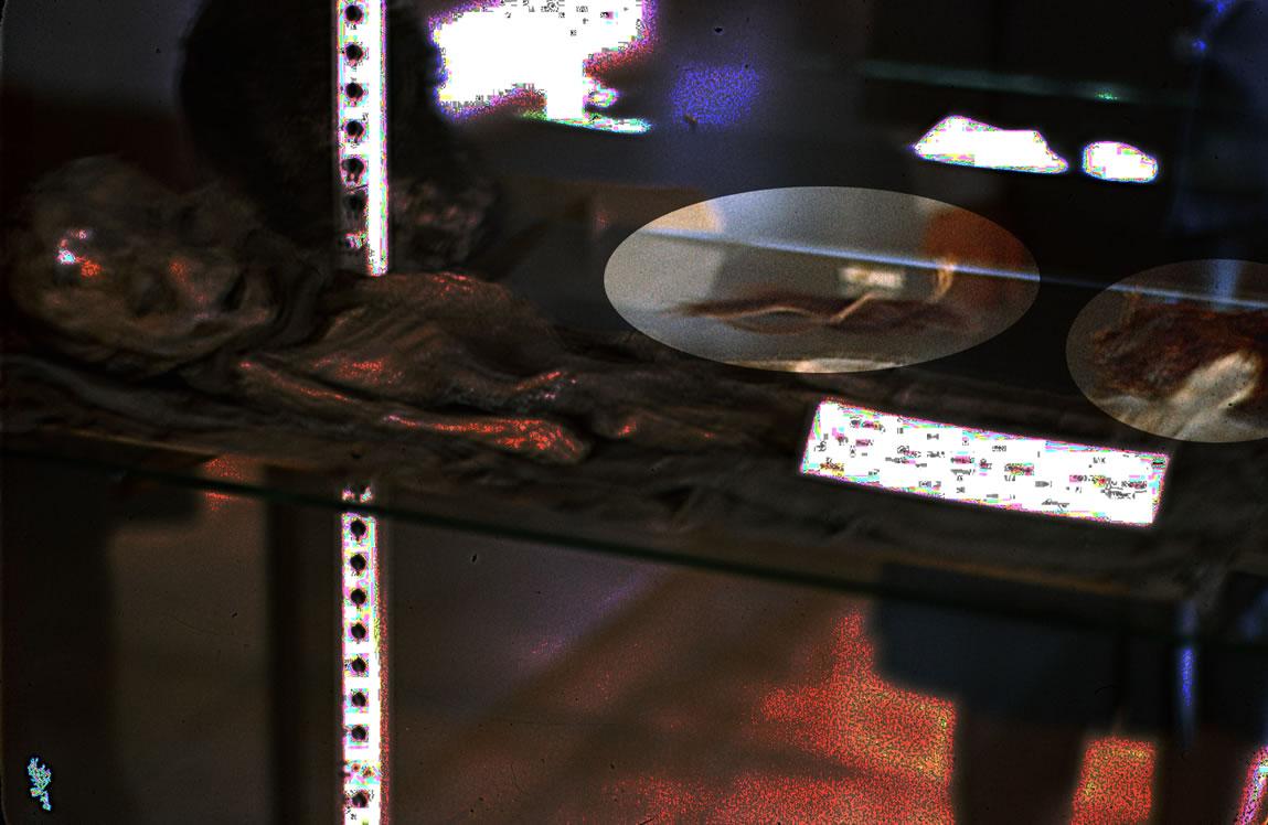 """Buscando en el case, pude ver otros artículos """"en la pantalla."""" Estos artículos no parecen ser """"relacionados a extraterrestres"""" de cualquier manera, y más bien, se parecen a otros objetos en exhibición. Usted puede ver el objeto en el centro del marco, se destaca en esta foto, también tiene una pequeña """"etiqueta"""" que probablemente también revela de que se trata lo que se exhibe."""