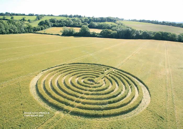 Crop Circle reportado el 22 de junio (2015) en Sunnyside, Nr Redlynch, Somerset. Crédito: MrGyro.co.uk