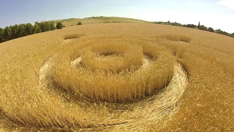 Crop circle reportado el 7 de julio (2015) en Groziethen, Brandenburg, Alemania.