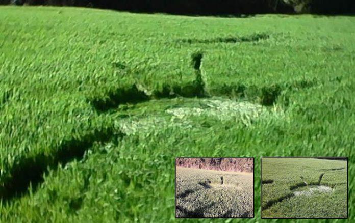 Segundo crop circle en presentarse en Chopinzinho, Brasil.