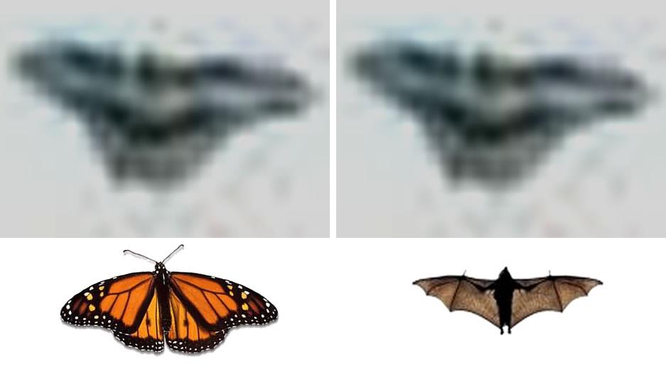 Al girar el objeto 180 grados revela una forma similar a una mariposa o a un murciélago.