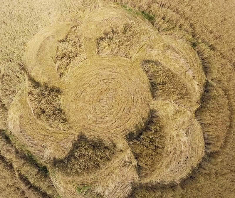 Crop circle en Brandenburg - Agosto 2015.
