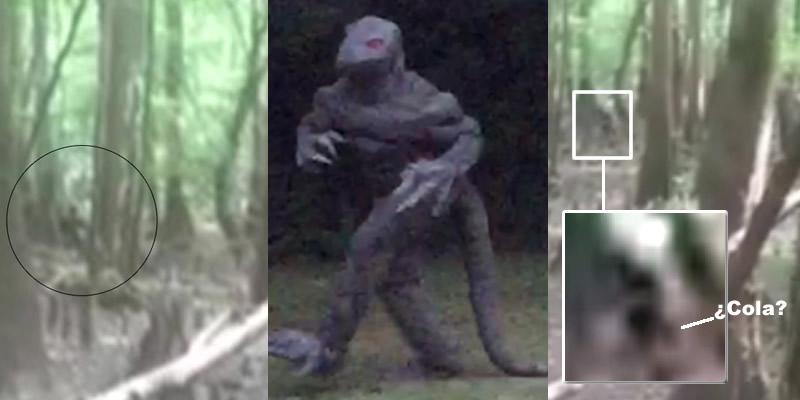 Una mujer de Carolina del Sur (EE.UU) afirma haber fotografiado un hombre lagarto