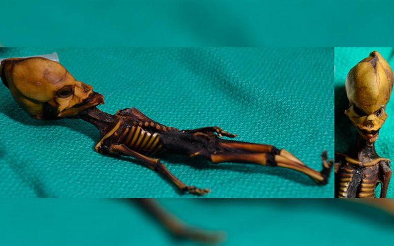«Ata», esqueleto hallado en Atacama, Chile.
