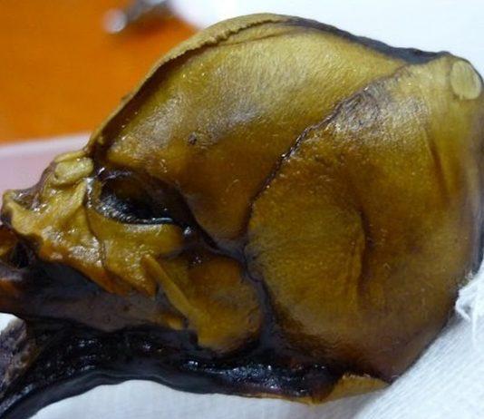 Revelan errores en análisis de la momia «alienígena» de Atacama, Chile