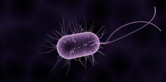 Rusia advierte que bacterias mutantes del espacio podrían ser mortales